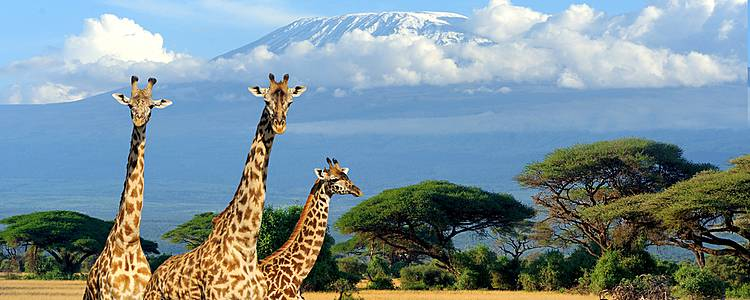 Safari adventure in Kenya