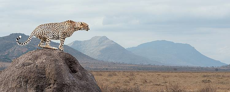 Adventurous wildlife in Kenya and Tanzania