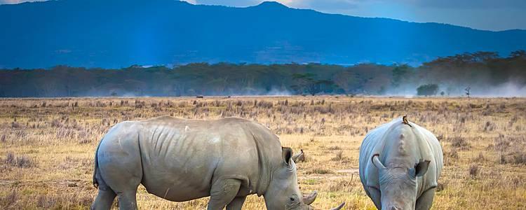 Kroks vs Hippos