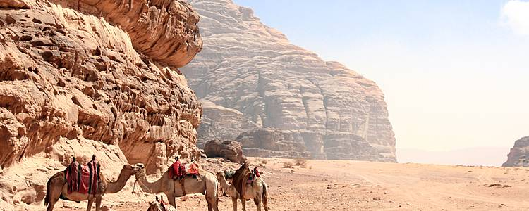 Explore Dana, Azrak and Wadi Rum