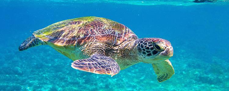 Wunderwelt der Tiere mit Walhaien, Delfinen und Schildkröten