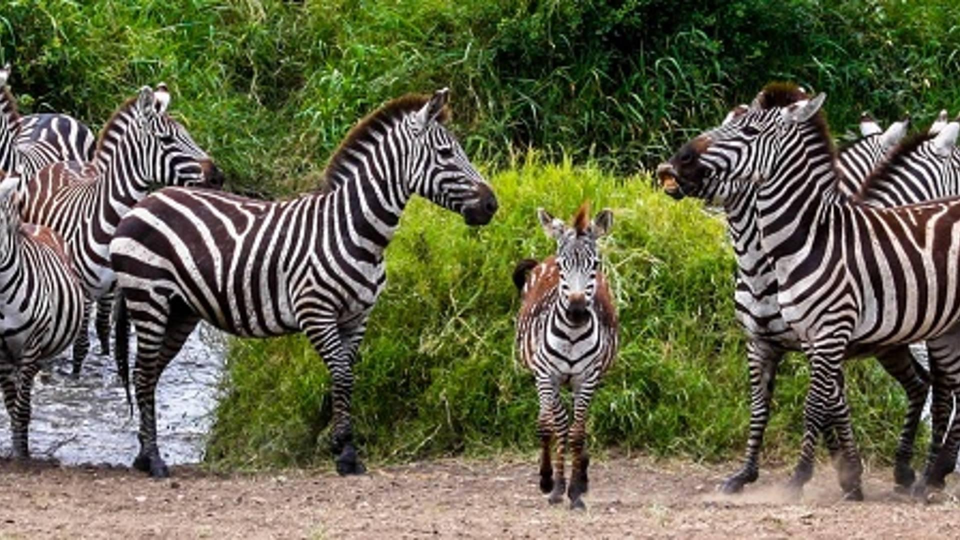 Le paradis des jeunes enfants : un safari en famille