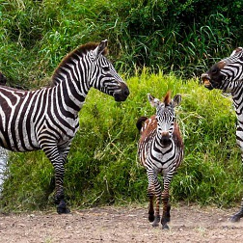 Le paradis des jeunes enfants : un safari en famille -