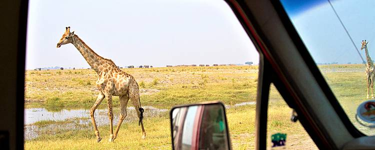 Explora Botsuana en coche de alquiler