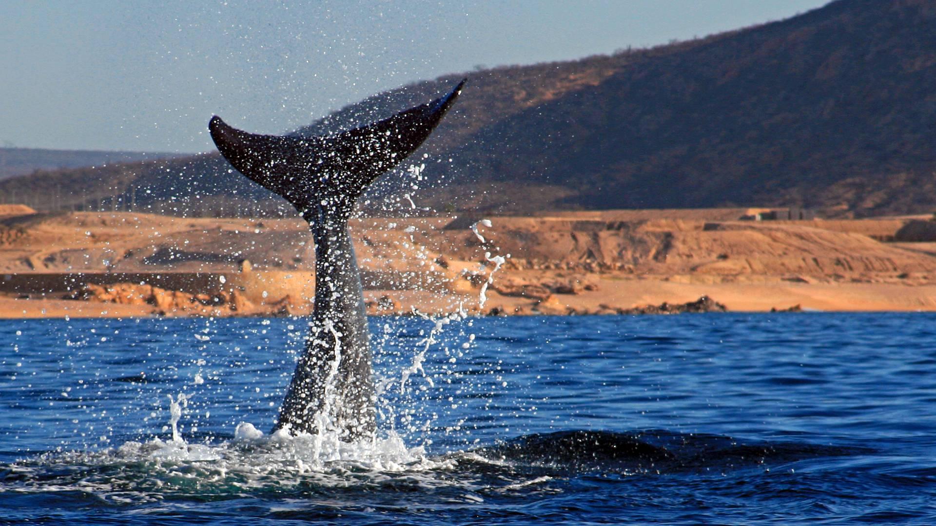 Balene e parchi naturali in un tour guidato