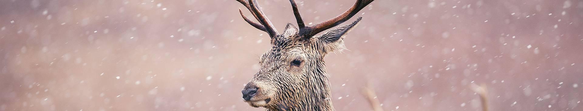 Viaggi in Scozia in inverno