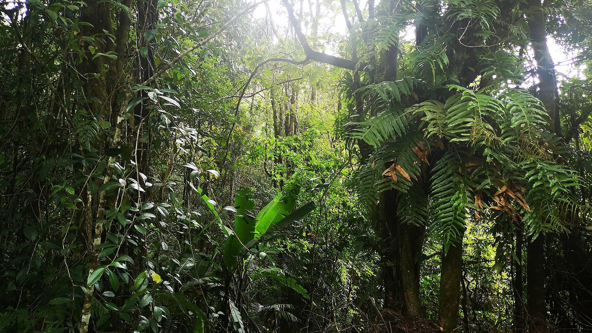 Avontuurlijke trektochten door de jungle