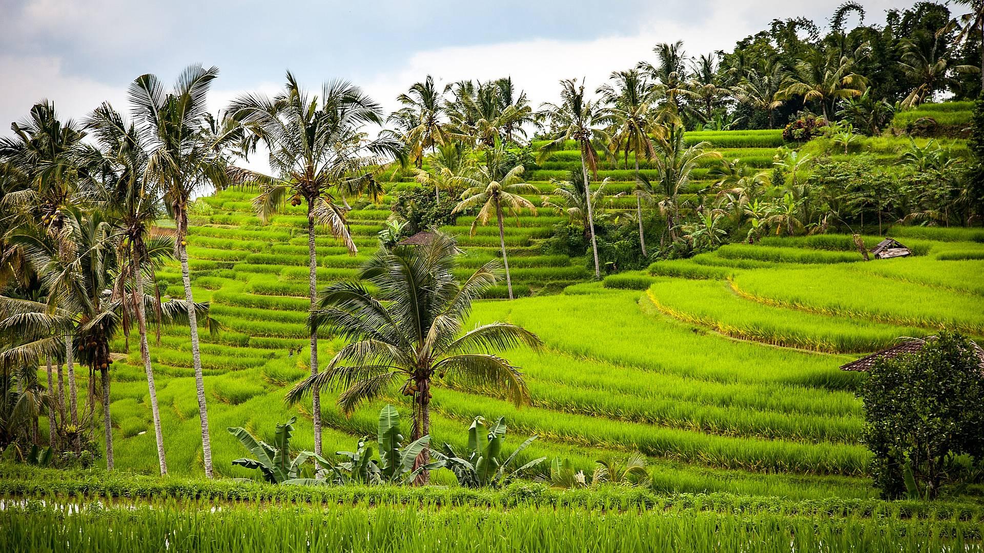 Geküsst von Sonne und Göttern auf Bali