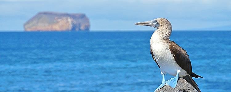Islas Galápagos en Catamarán