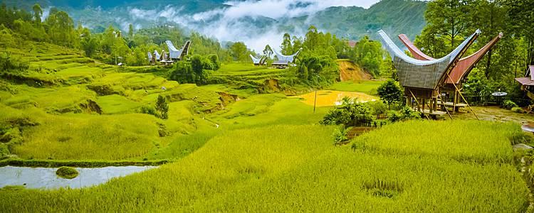 Naturaleza de Bali e inmersión cultural en Sulawesi
