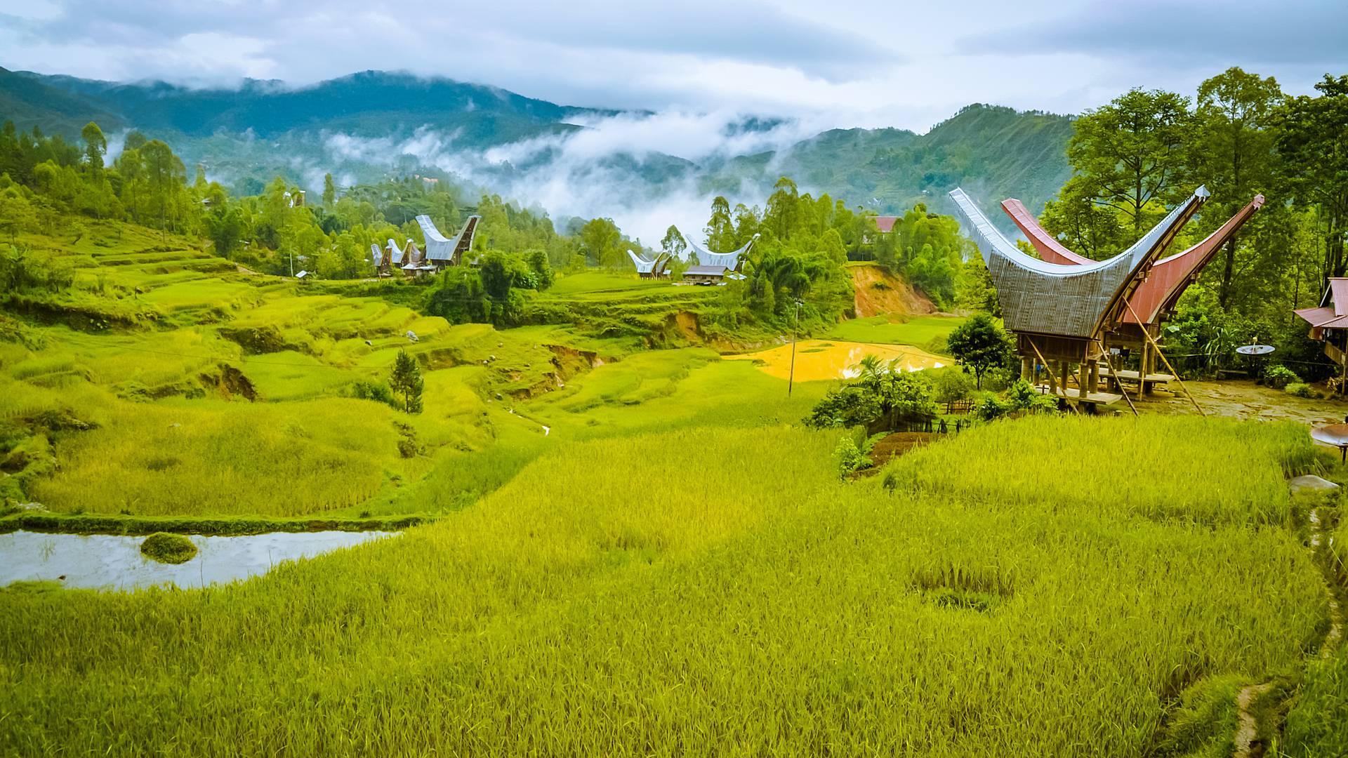 L'affascinante Sulawesi e il Paradiso di Lombok