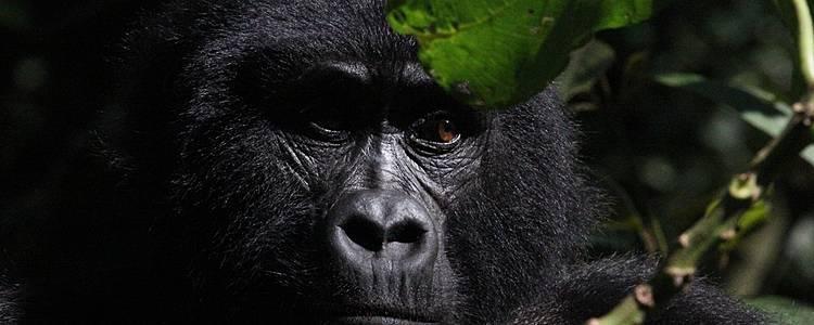 Tour dei primati