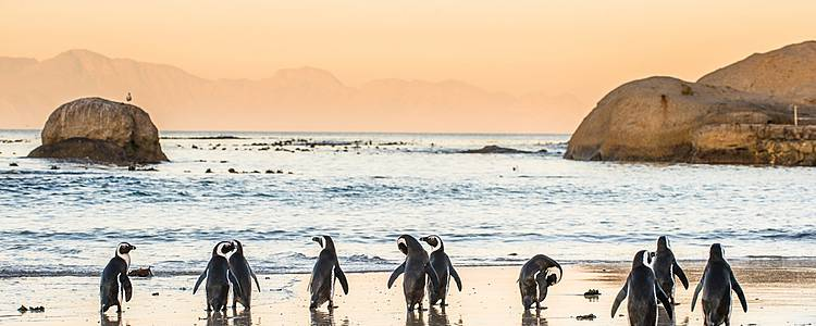 The Ingadi road trip: Cape Town and the Garden Route