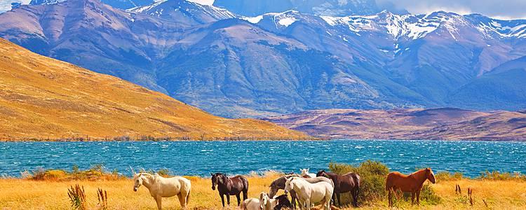 Easter Island, Atacama Desert and Patagonia