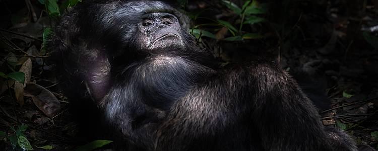 Big five e primati