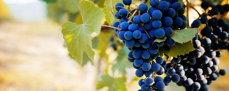 Pueblos y viñedos de Piamonte