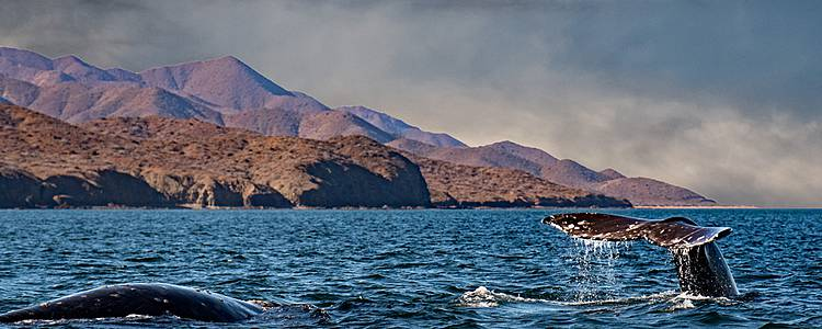 Winter and whales in Patagonia
