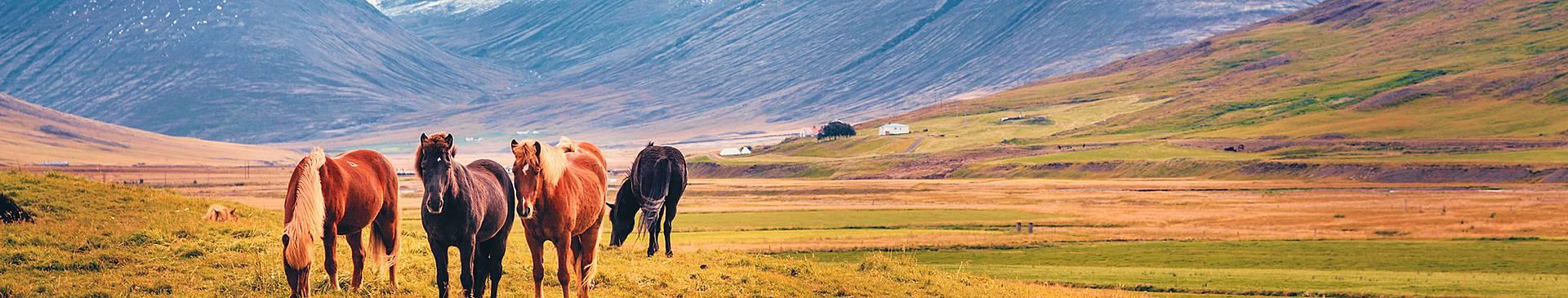 Viajes a Islandia en primavera