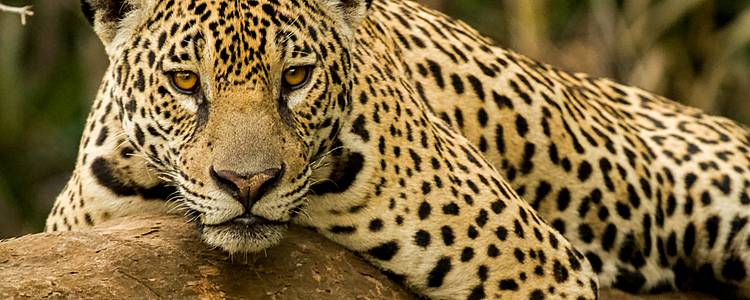 Le Pantanal, paradis écologique