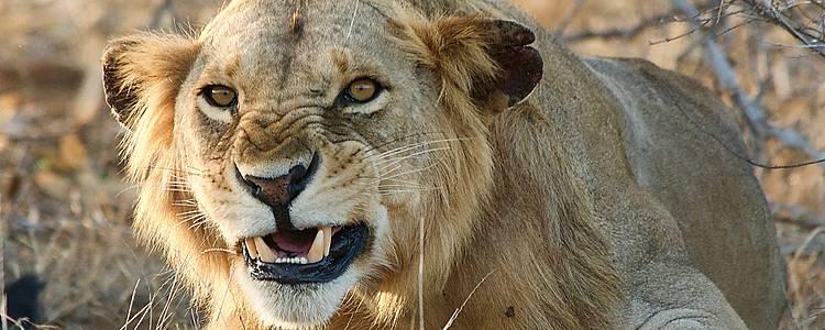 Safari autentico: campo tendato mobile e relax a Malindi
