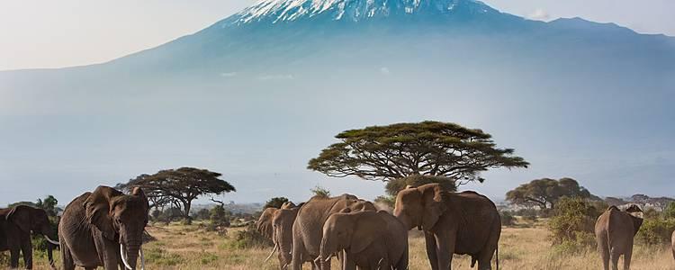 Tra il Kilimanjaro e l'Oceano Indiano