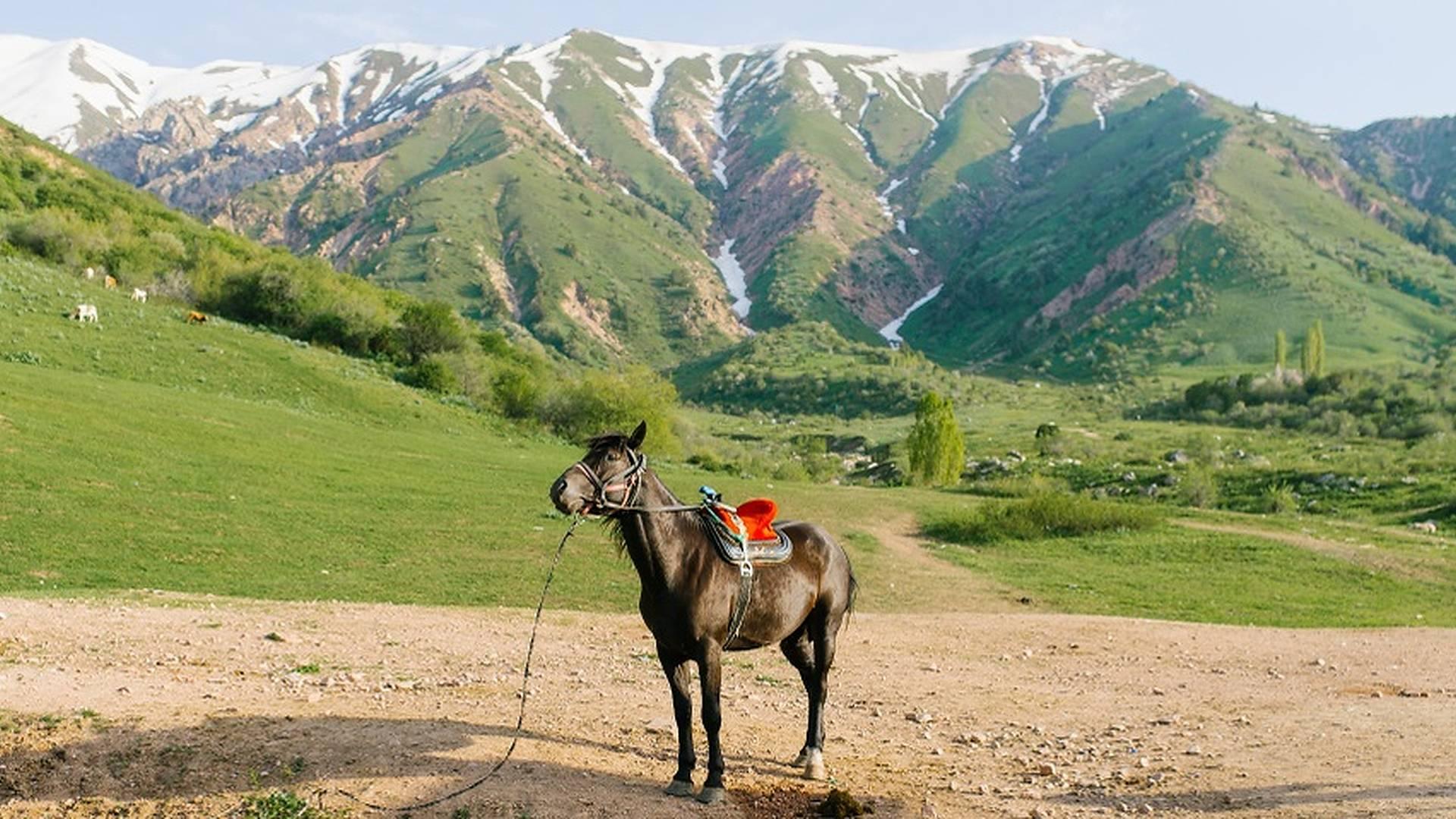 Durch die atemberaubende Naturkulisse des Landes reisen
