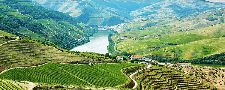 Douro Valley wine and nature
