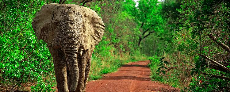 Cultural and wildlife journey through Ghana, Togo and Benin