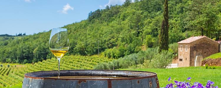 Foodie adventure with wine pairings