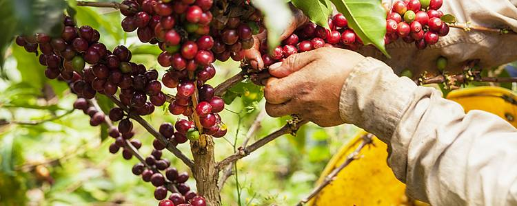 Capital cities, coffee farms and cooking classes