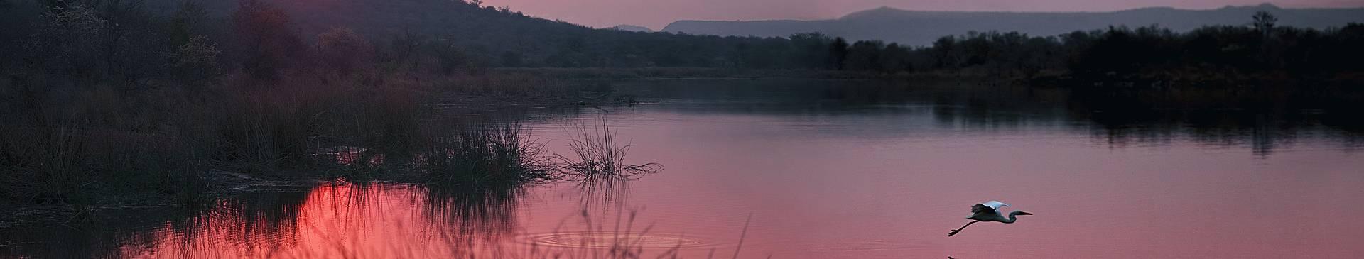 Voyage de noces au Botswana