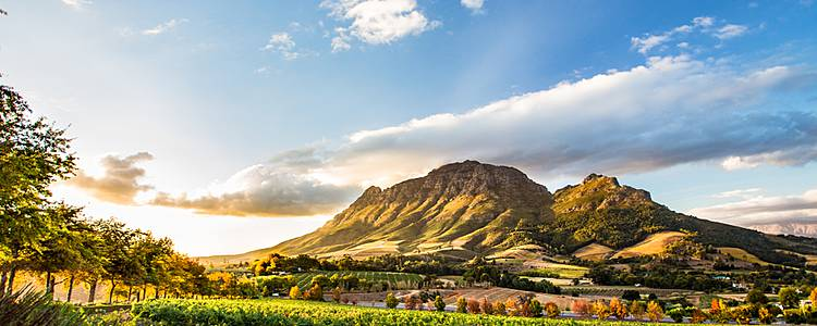 Safari, winelands and city escape