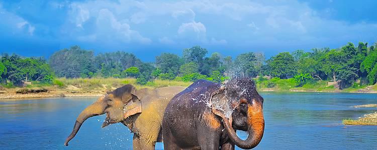 Highlight-Tour: Kultur, Himalaya und Wildtiersafari