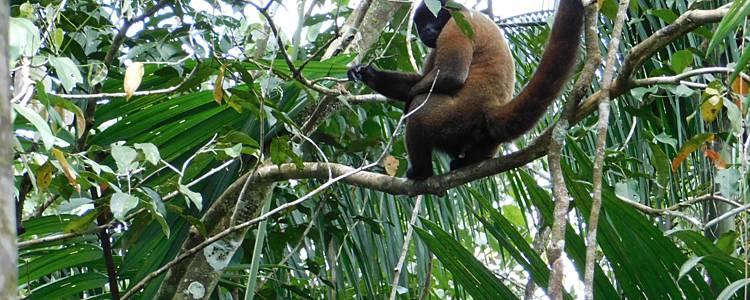 Premiers pas en Amazonie et immersion caribéenne