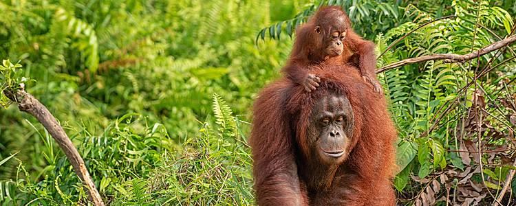 Mistici Sarawak e Borneo