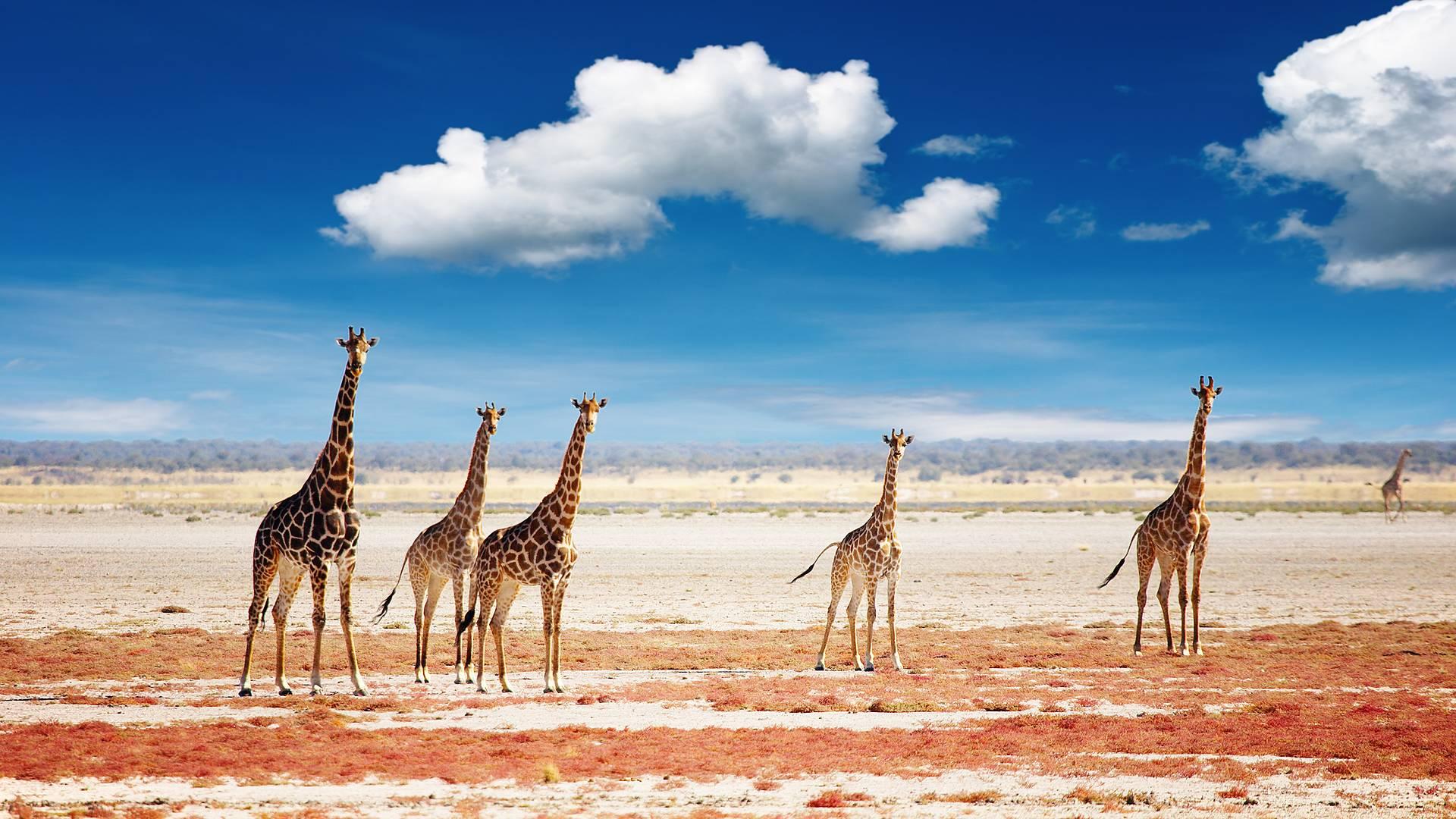 La Namibie du Nord au Sud