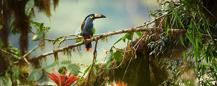 Birdwatching in Northern Ecuador