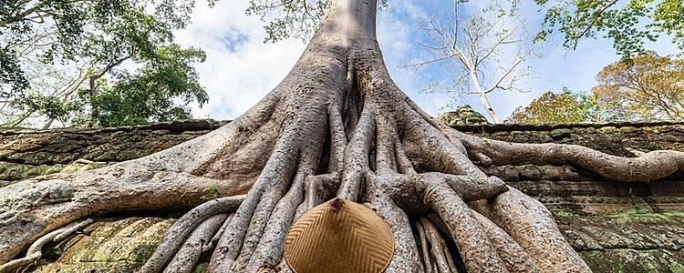 Entre nature et culture, temples et plage de rêve