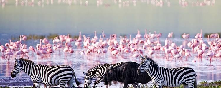 Safari mozzafiato: a cavallo nella savana e alba sul Serengeti