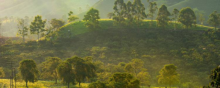 Goldene Tage im Schatten der Kaffeepflanzen