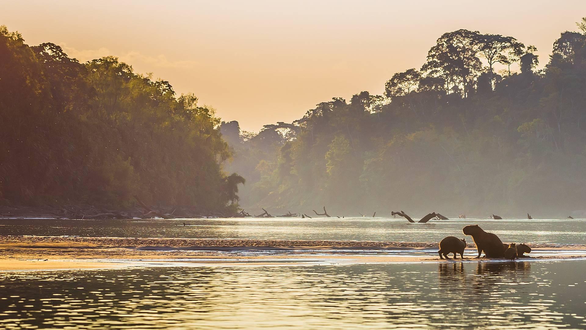 Naturwunder der Welt : Amazonas und Pantanal