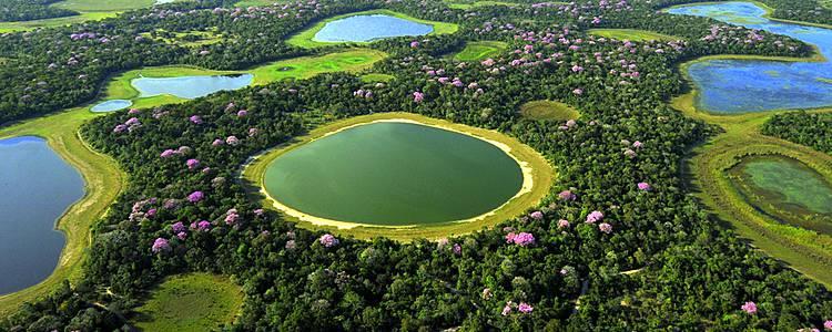 Bain de nature luxuriante dans la région du Pantanal sud