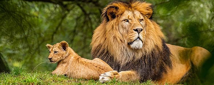 Safari Simba, flora y fauna al máximo