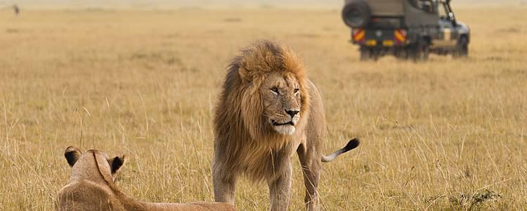 Safari Uzuri Kenia