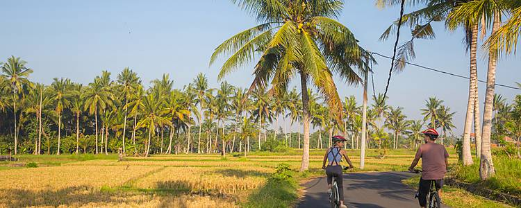Bike through rice fields and temples
