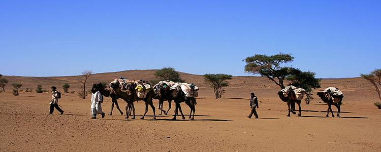 Carovane e cammellieri: dalle dune alle oasi