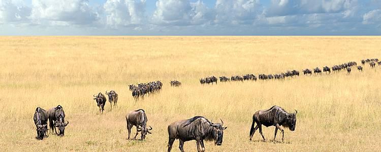 Die Big Migration Hautnah