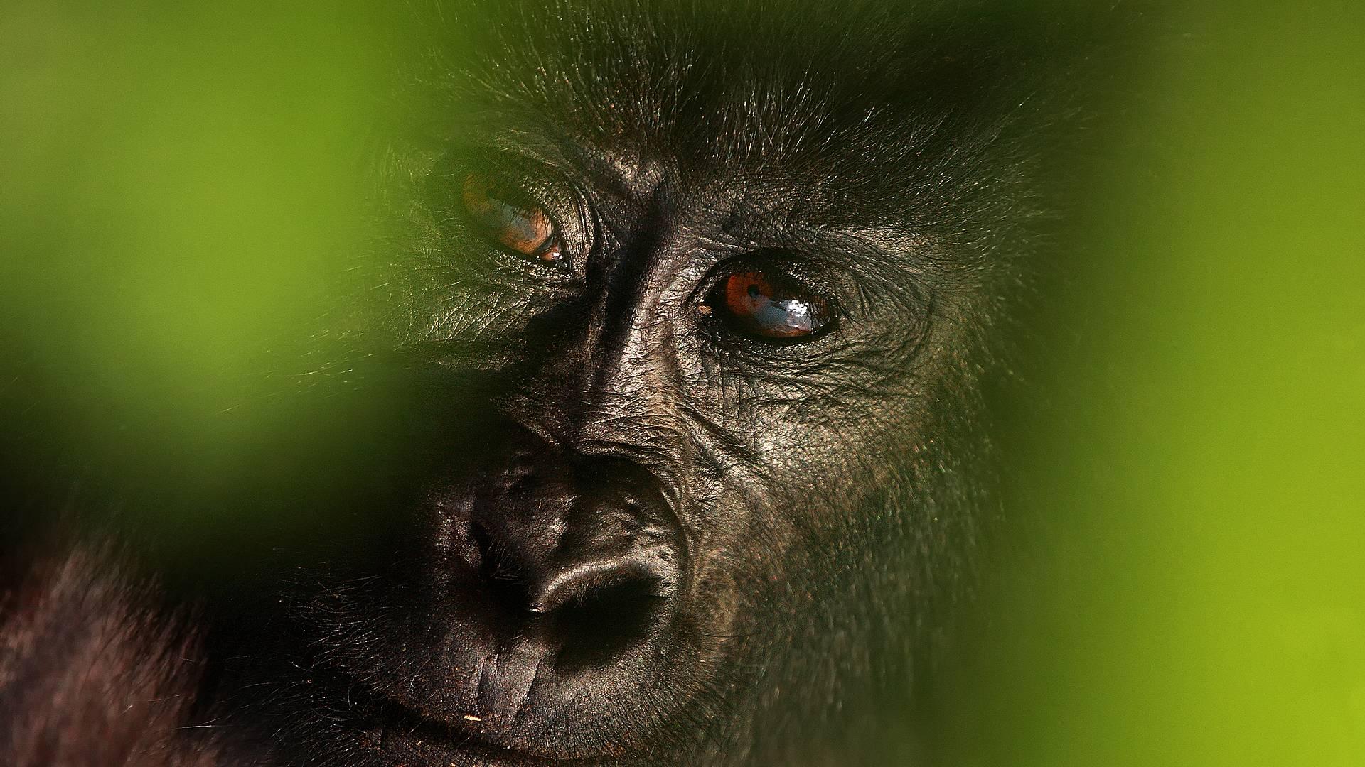 Gorillas, Savanne und Co ! Ostafrika Deluxe
