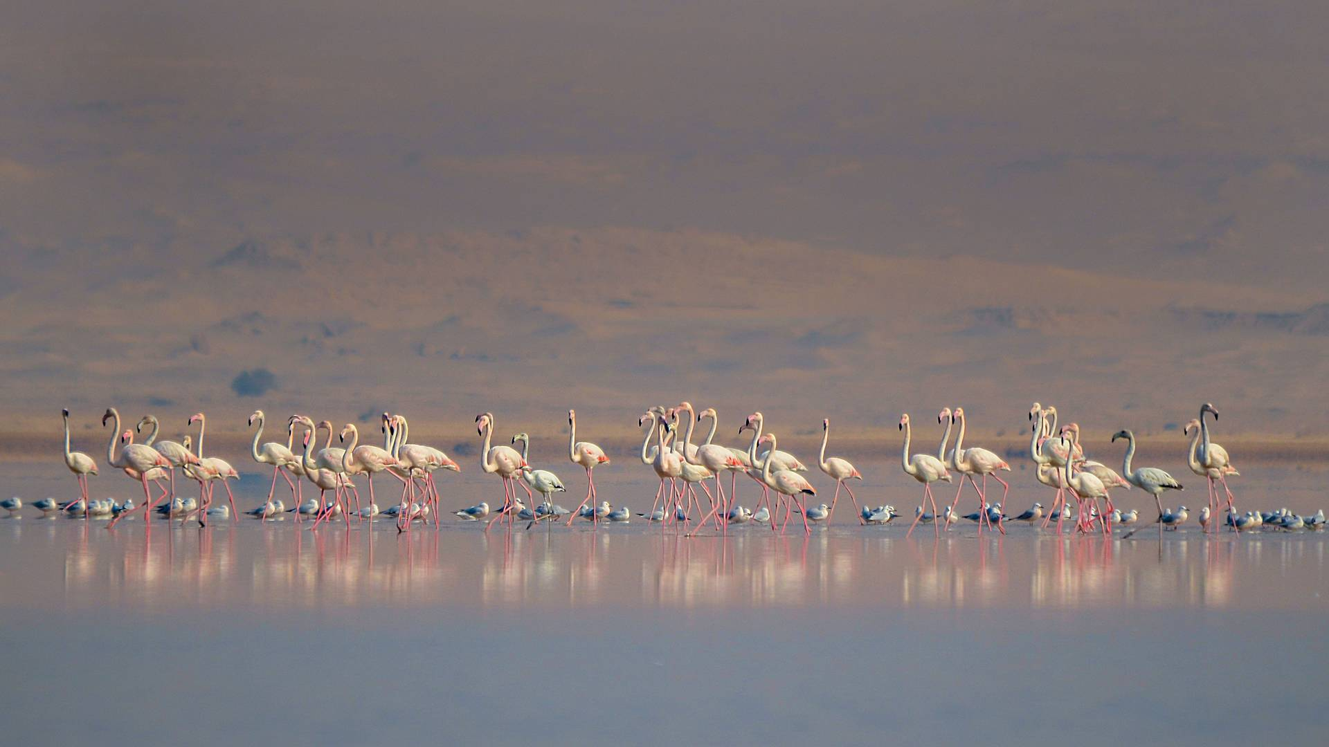 Birdwatching e safari nel deserto