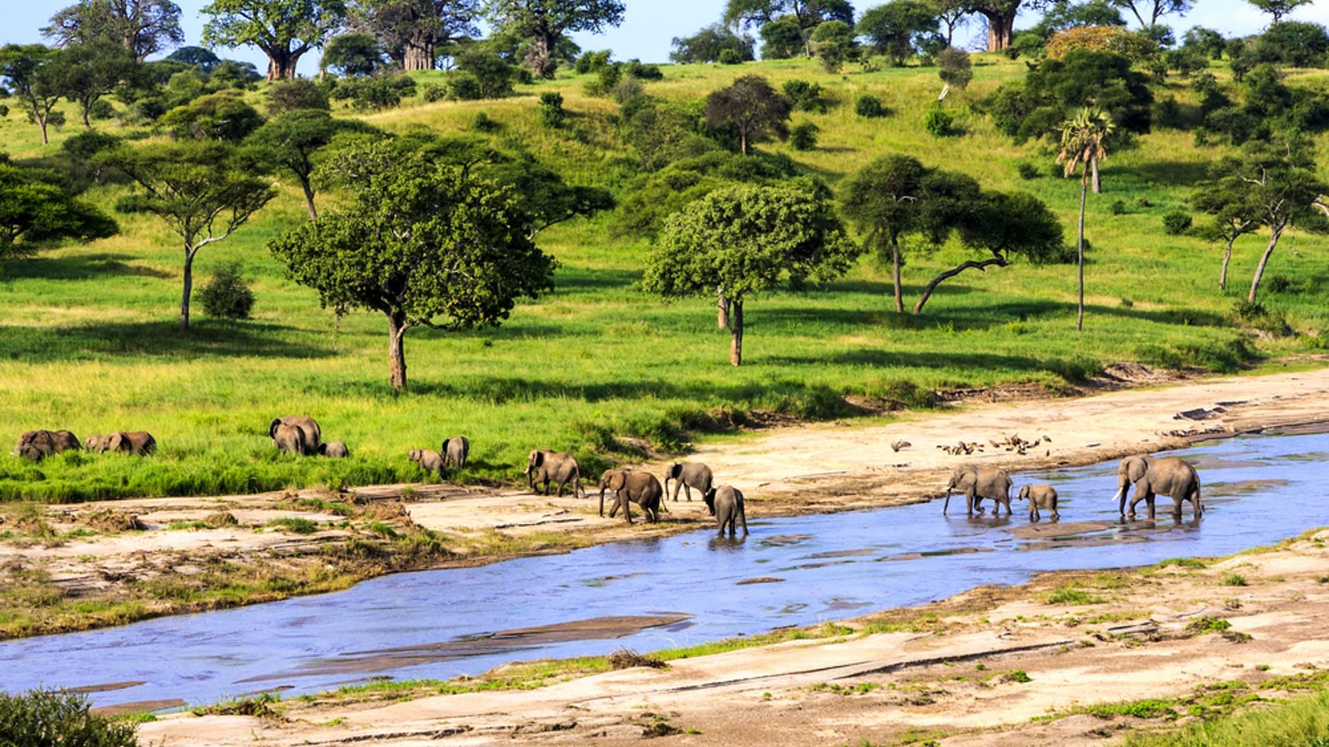 Les grands parcs du Kenya et de la Tanzanie en safari